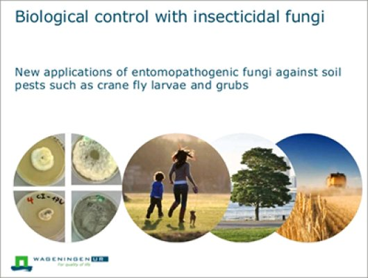 Biological control with insecticidal fungi