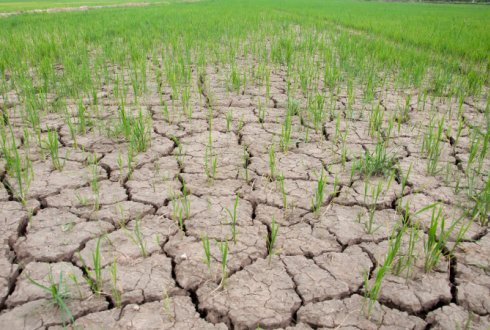 Climate and soils