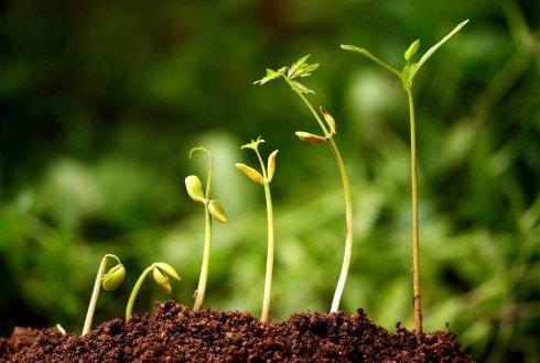Afbeeldingsresultaat voor leren planten