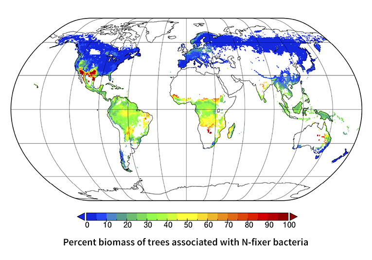 Researchers map how trees, fungi and bacteria collaborate on ... on