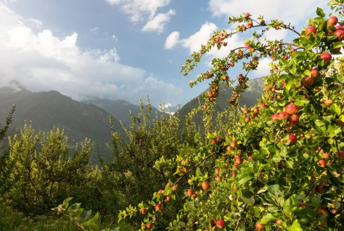 Establishing modern storage and processing facilities for fruit in Himachal Pradesh, India