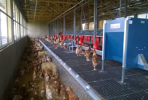 Holland Africa Poultry Farmers