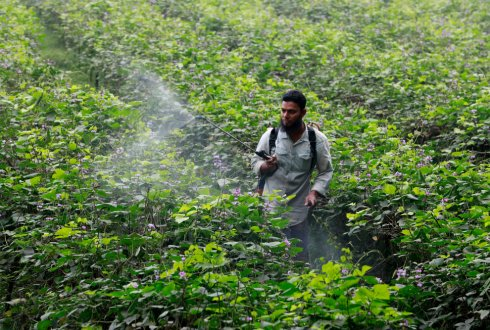 Effects of insecticides on aquatic ecosystems in Bangladesh