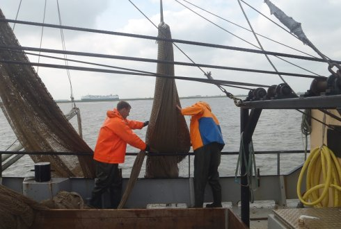 Sampling by anchor trawling in the Western Scheldt