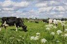 high-tech voor meer biodiversiteit_DairyCampus Innovatiefonds