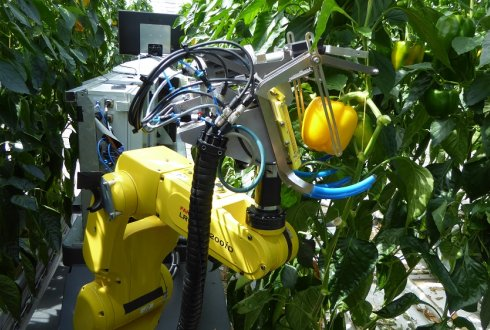 Sweet pepper harvesting robot project SWEEPER close to the finish line
