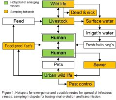 Transmission routes of zoonotic viruses between people, wastewater, urban wildlife, food and feed