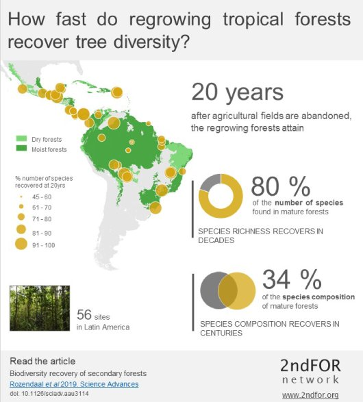 "<L CODE=""C05"">Infographic Biodiversity recovery of secondary forests</L>"