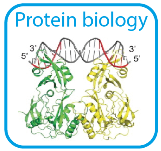 ProteinBiology.png