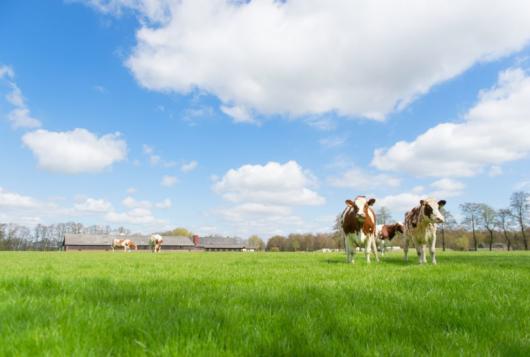 Wat betekenen grassoorten en grasmengsels voor de draagkracht van graslandpercelen?