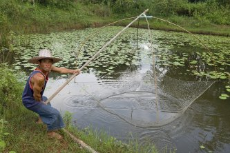 Nutritious system pond farming to produce quality seafood