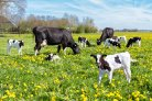Prospects of whole-genome sequence data in animal and plant breeding