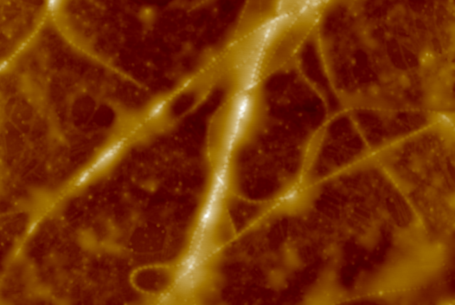 AFM image of FMOC-LG+CSSC composite