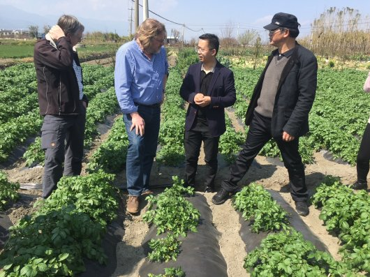 discussion soil borne disease potato Schepers Been, Lyu, Guo