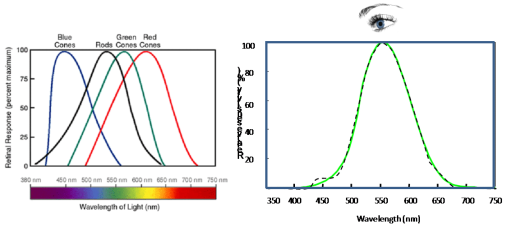 Figure 2. Human eye response. Spectral response of rods  and cones cells on the retina