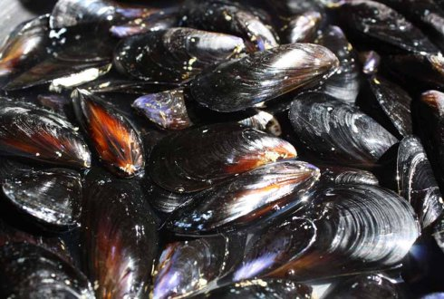 Shellfish population shifts