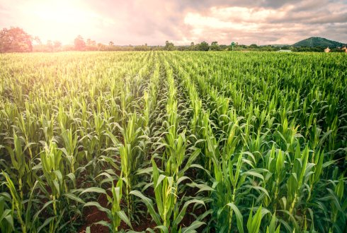 Improved crops can double European agriculture production - WUR