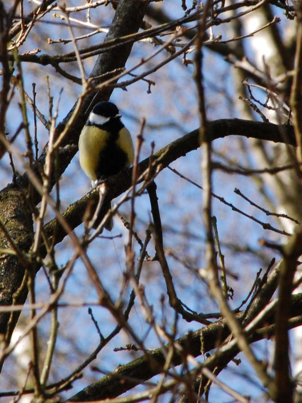 PhD position: Sexual selection in the wild: male song and ...