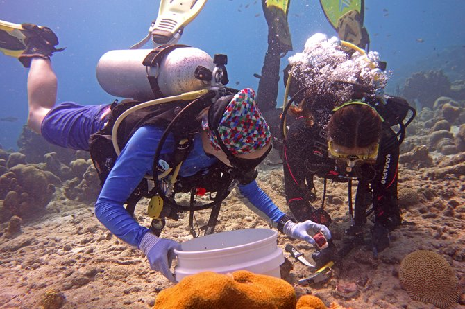 In the project 'Pumping iron' scientists from Wageningen University & Research study the effect of iron availability on reef community shifts from coral to sponge domination. Photo: Benjamin Müller