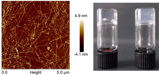 Fig. 1. The proteins self-assemble into fibers. These fibers stick together and form a hydrogel.
