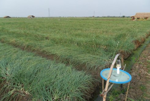 Shallots in Indonesia. Searching for suitable cropland.