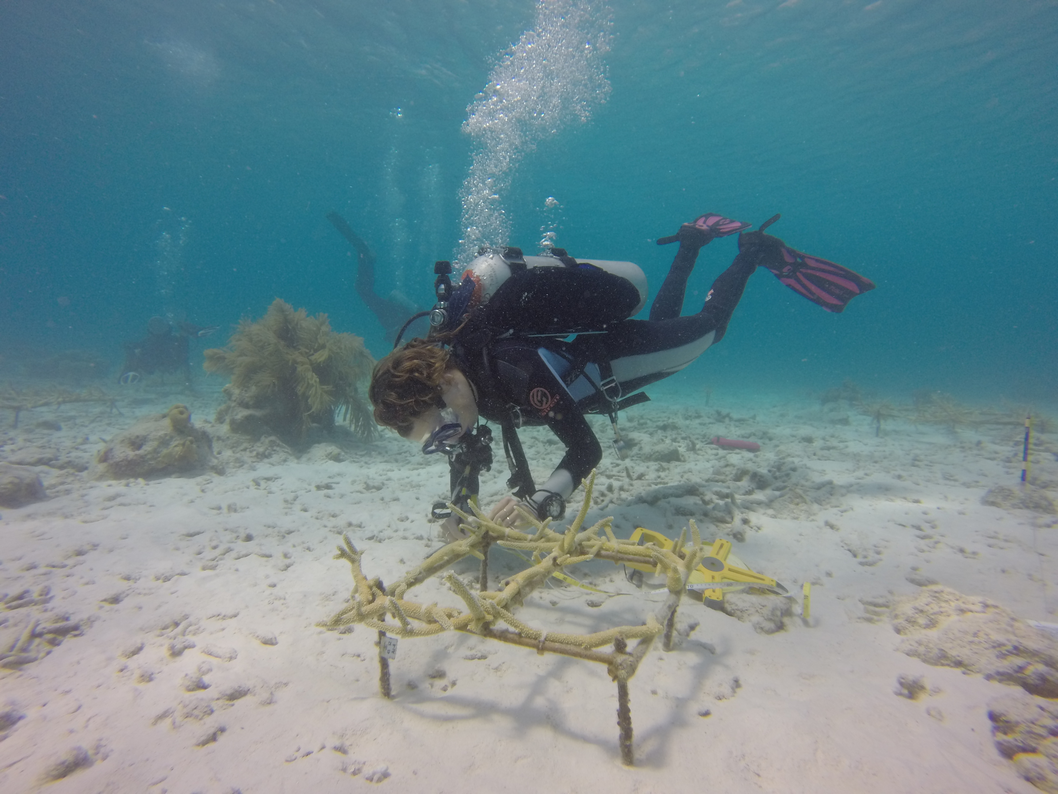 measuring coral reef in Bonaire.jpg