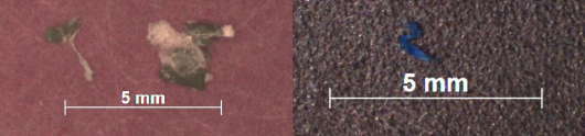 Photo 2: Examples of plastic particles found in Antarctic fur seal scat samples
