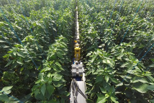 Sweeper (Sweet pepper harvesting robot) getest in Belgische kas