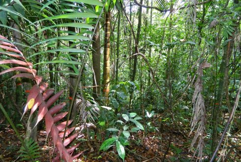 Regrowing tropical forests recover fast in tree species richness, but slow in species composition