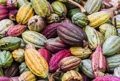 Certifications, Child Labour and Livelihood Strategies: An Analysis of the Cocoa Production in Ghana