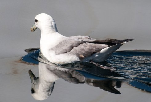 A little less plastics in fulmar stomachs