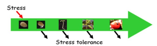 Fig 2. Exposure of seeds to stress may induce the expression of genes that are common in the resistance to different stresses and the activity of these genes may be preserved beyond the seed and seedling stage.