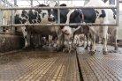 mestscheiding in melkveestallen