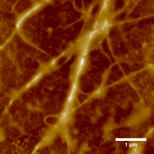 AFM image of a FMOC-LG+CSSC composite (by W. Rombouts)