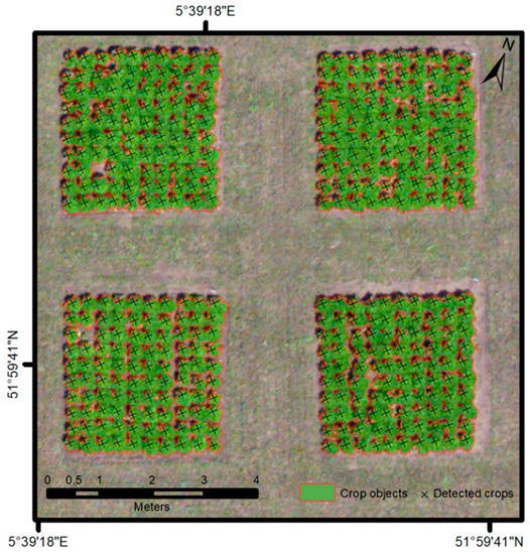 Location of individual endive crop identified using object-based image analysis (OBIA)