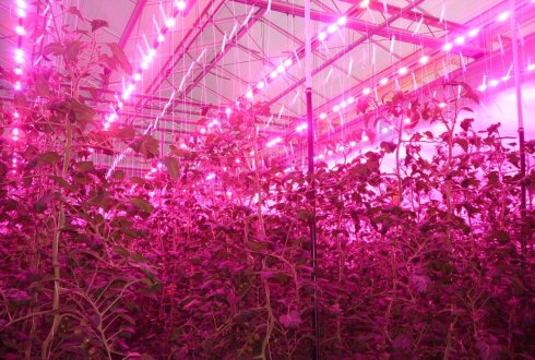 Improve LED-lighting to reduce energy consumption for greenhouse ...
