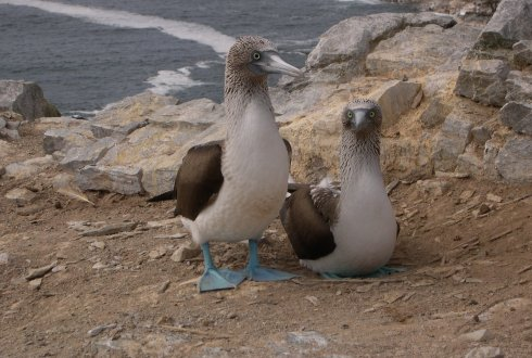 One tree likes seabird poop, the next prefers fresh air