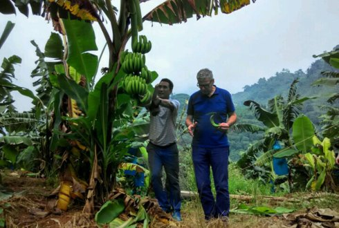 First report of Panama disease in Cavendish bananas caused by TR4 in Colombia