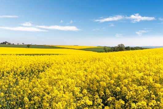 Mildly derived ingredients for the utilization of oilseed material