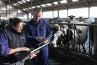 Doelen Duurzame Zuivelketen deels gerealiseerd; toename veestapel zorgt voor forse uitdagingen
