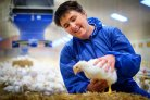 Smart cameras help ensure broilers stay brisk