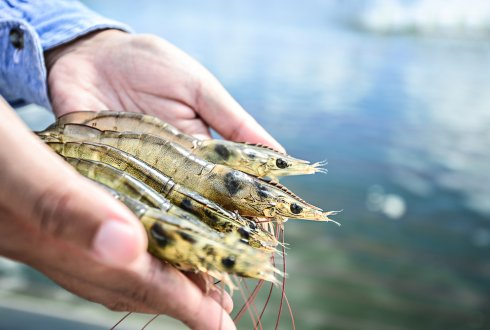 New feed technology to offer more nutritious and sustainable aquaculture in Vietnam