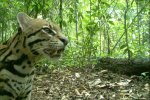 Camera traps are used to monitor wildlife communities