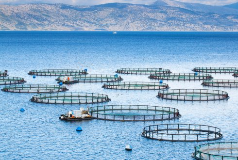 The economic optimization of breeding programs in aquaculture