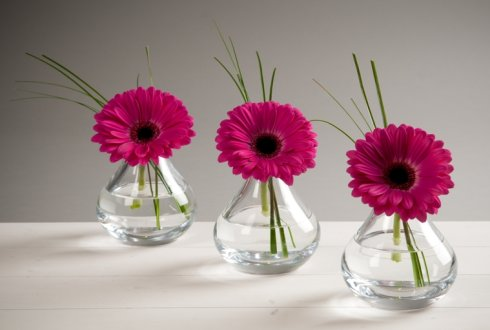 Bacteria Growth And Sugar Leakage Of Gerbera Cut Flower Wur