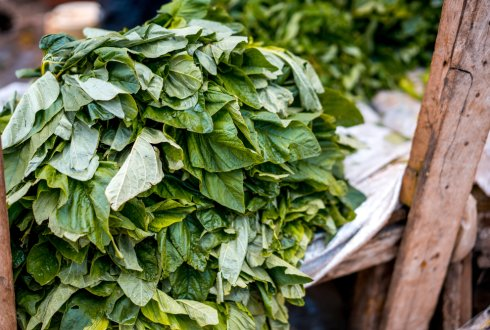 Assessment of Nutritional Water Productivity and improvementstrategies for traditional leafy vegetables in South Africa