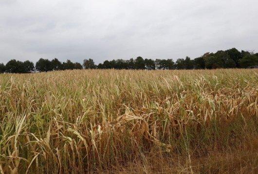 Extreme droogte terug te zien in resultaten KringloopWijzer