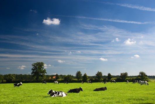 Gras belangrijk item binnen de melkveehouderij_Amazing Grazing