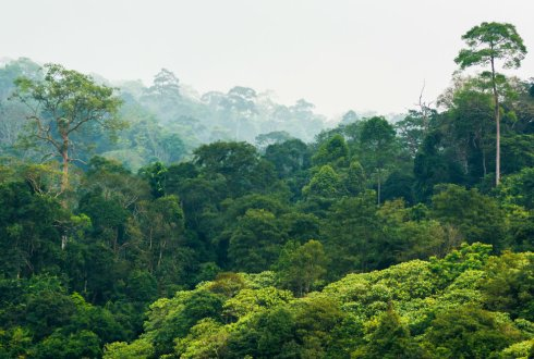 Resilience of tropical forest and savanna: bridging theory and observation