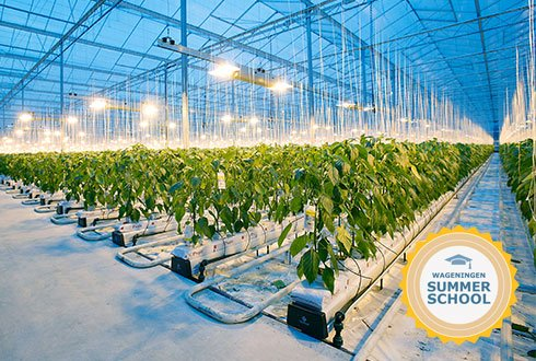 Summer School Greenhouse Horticulture Full Wur